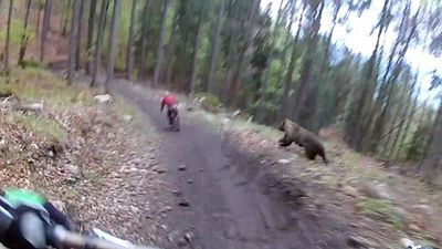 Thót tim trước cảnh hai nam thanh niên bị gấu hoang dã rượt đuổi