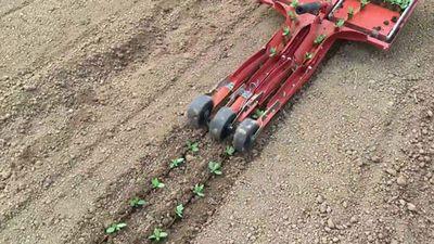 Clip: Máy trồng rau rút ngắn 80% thời gian lao động