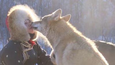Dùng miệng bón cho chó sói ăn, cô gái khiến bao người thót tim