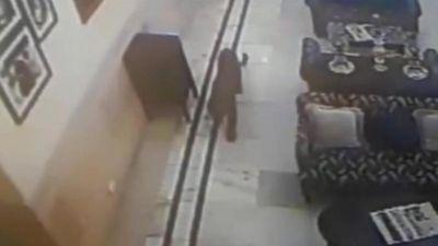 Báo hoa mai lang thang suốt 15 phút trong khách sạn mà không bị ai phát hiện