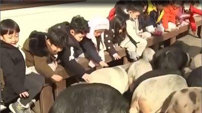 Thăm bảo tàng lợn siêu dễ thương ở Hàn Quốc