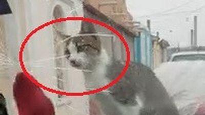 Dùng chân dọa mèo, lái xe làm nứt luôn kính ôtô
