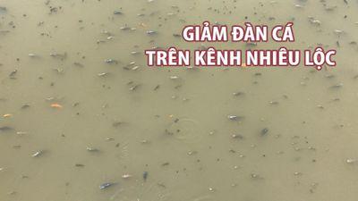 Tiếp tục xin giảm đàn cá trên kênh Nhiêu Lộc - Thị Nghè