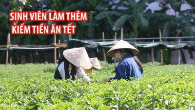 Sinh viên nghèo bám vườn hoa kiếm tiền mua vé xe về quê ăn tết