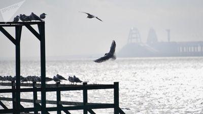 Nga: Cháy 2 tàu ở eo biển Kerch, 11 người thiệt mạng