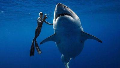 Cuộc gặp bất ngờ với con cá mập trắng lớn nhất hành tinh