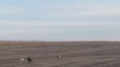 Chú chó mất tích bất ngờ trở về nhà với hai 'người bạn' mới