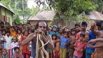 Clip: Người đàn ông đùa rỡn với cả đàn rắn hổ mang kịch độc