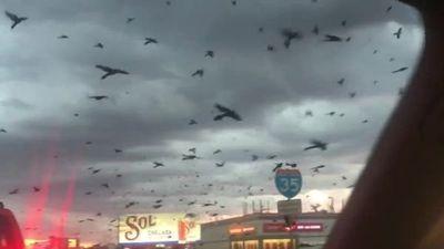 Hãi hùng cảnh hàng ngàn con chim vây chiếm bầu trời như ngày tận thế