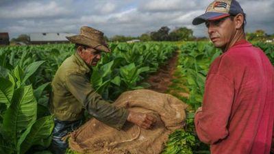 Xì gà Cuba đạt doanh thu kỷ lục nhờ Trung Quốc