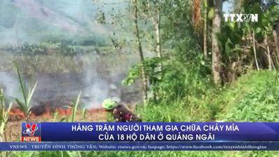 Hàng trăm người tham chữa cháy mía của 18 hộ dân ở Quảng Ngãi