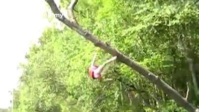 Những pha té đau đớn khi đu mình trên các cành cây cao