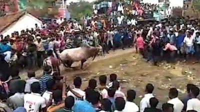 Bò mộng lao thẳng vào đám đông tại sự kiện tôn giáo Ấn Độ