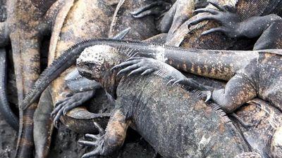 Tham quan thánh địa động vật hoang dã ở Ecuador