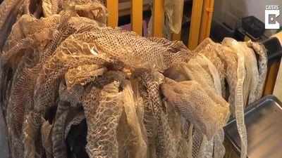 Người phụ nữ Anh nuôi hàng trăm chú trăn làm thú cưng