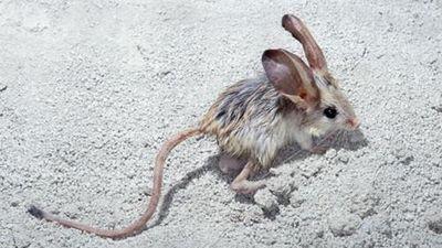 Sự thực khó tin về những chiếc đuôi động vật độc lạ