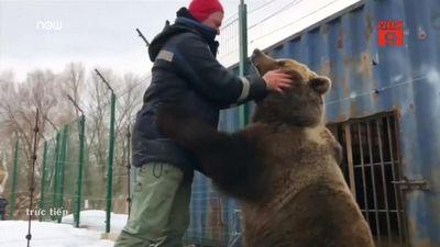 Phi công Nga nuôi gấu khổng lồ nặng 2,5 tạ làm thú cưng