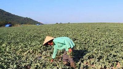 CLIP: Côn đồ trắng trợn đòi 'bảo kê', cướp 'bát cơm' nông dân nghèo tại Phú Yên