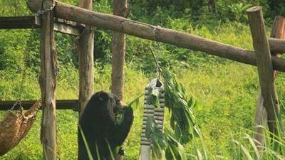 'Hãy cho gấu cuộc sống tốt đẹp hơn tại các trung tâm bảo tồn'