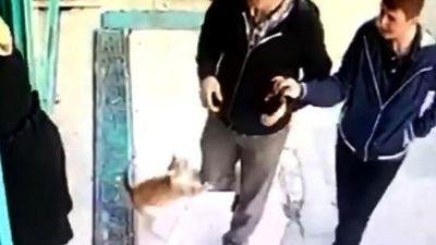 Chú mèo Thổ Nhĩ Kỳ chỉ lao ra tấn công… nam giới và chó