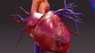 Trái tim ở ngoài cơ thể có đập nữa không?