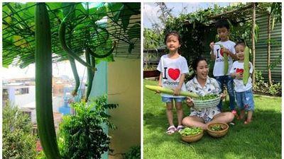 Thích thú ngắm giàn mướp trĩu quả trong nhà sao Việt