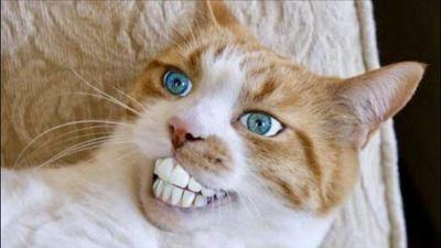 Xem video về mèo là liệu pháp trị căng thẳng, tăng sự hạnh phúc