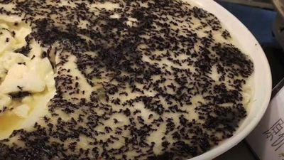 Cantin trường đại học ở Trung Quốc phục vụ món 'trứng hấp với kiến'