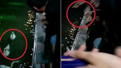 Clip: Người phụ nữ cho thiên nga ở Hải Phòng ăn vô tội vạ khiến dân mạng bức xúc