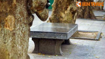 Cận cảnh chiếc ghế đá cổ đặc biệt nhất Việt Nam