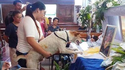 Chú chó khóc trước linh cữu người chủ đã mất ở Philippines
