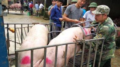 Bất ngờ: Chợ lợn lớn nhất miền Bắc xôn xao mua bán giữa 'bão' dịch