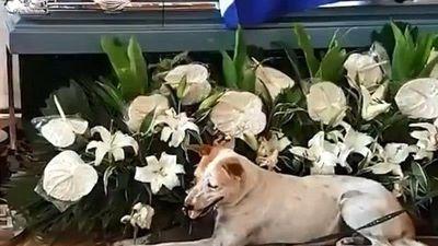 Cảm động chú chó ngày ngày đợi bạn đã qua đời