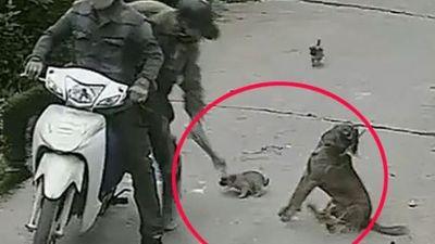 Cận cảnh 'cẩu tặc' dùng súng điện trộm chó trong tích tắc