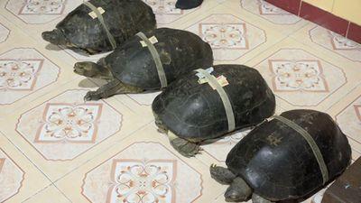 Rùa trăm tuổi tự do đi lại trong ngôi chùa ở Đồng Tháp