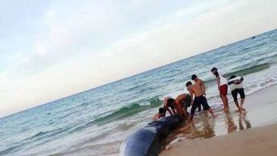 Sững sờ xác cá voi 2 tấn dạt vào bờ biển Khánh Hòa