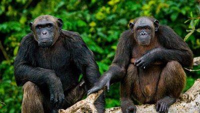 CLIP: Khi động vật cũng dùng mưu tính kế