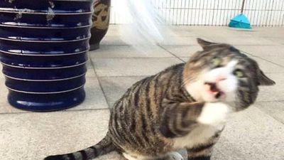 Phản ứng quá khích, biểu cảm kịch tính, mèo cưng nổi như cồn