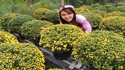 Khám phá 'choáng' về cúc mâm xôi được trồng nhiều ở ĐBSCL