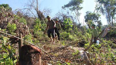 Phát hiện thêm vụ việc chặt phá rừng ở Nghệ An