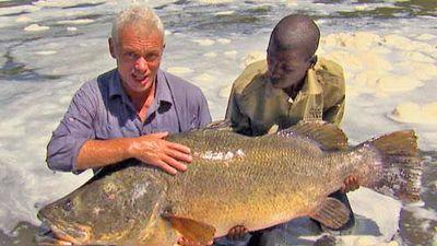CLIP: Cần thủ tóm gọn cá rô sông Nile nặng 45kg