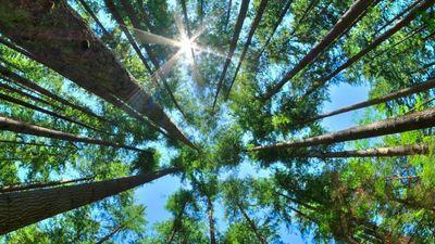 Điều gì xảy ra nếu Trái Đất được phủ kín bởi hàng nghìn tỷ cây xanh?