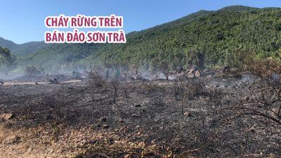Rừng bạch đàn trên bán đảo Sơn Trà tan hoang vì cháy