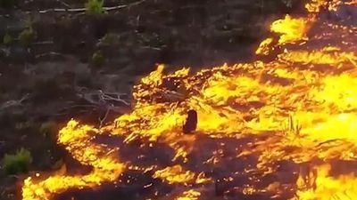 Xót xa chứng kiến lá phổi Amazon cháy với tốc độ kỷ lục
