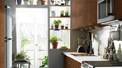 Những cây trồng hữu ích trong nhà bếp
