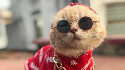 Tìm hiểu cách loài mèo 'xâm chiếm' Trái Đất