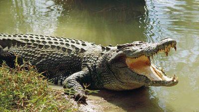 Ngư dân bất ngờ câu được cá sấu lớn