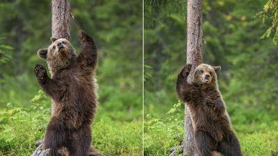 Gấu con nhảy vũ điệu gãi ngứa cực yêu và vui nhộn