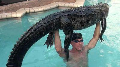 Thấy cá sấu trong bể bơi, người đàn ông làm chuyện ai cũng 'khiếp'...