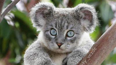 Góc nhìn cực choáng khi động vật 'cấy ghép' mặt mèo